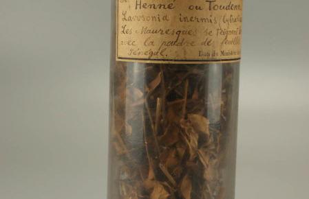 Henné Lawsonia inermis